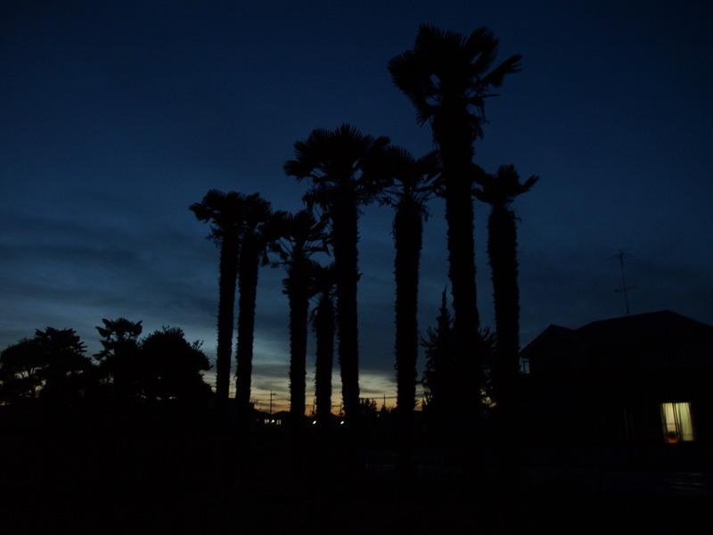 Sunset22